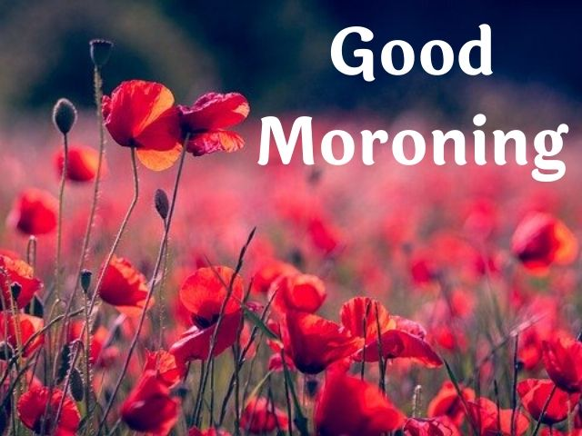 Good Morning Flowers Pictures HD