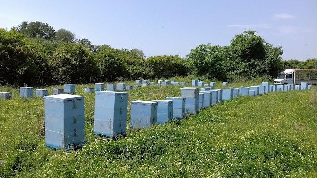 Σημαντικό ΝΕΟ για τις ανθοφορίες... Να το ξέρουν όλοι οι μελισσοκόμοι