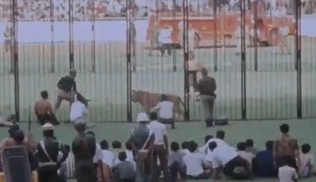 Di Gelora Bung Karno, Pernah Ada Pertunjukan Manusia Melawan Singa
