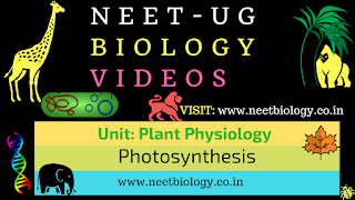 Photosynthesis videos