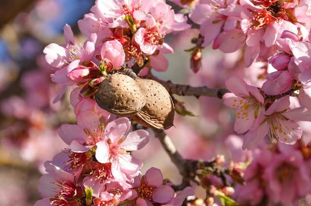 Broken Almond Business Idea - Almond Tree