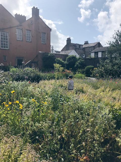 Little boy wandering in a pretty garden