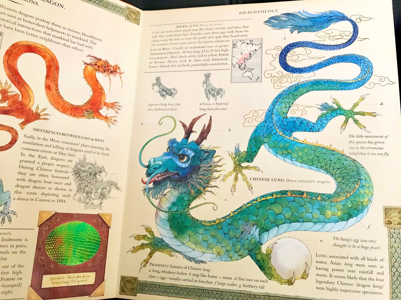 Feeling Fictional: Review: Dragonology: The Complete Book of