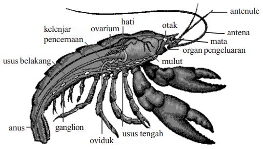 Makalah Arthropoda