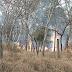 Incêndios estão aumentando assustadoramente em Santa Rita