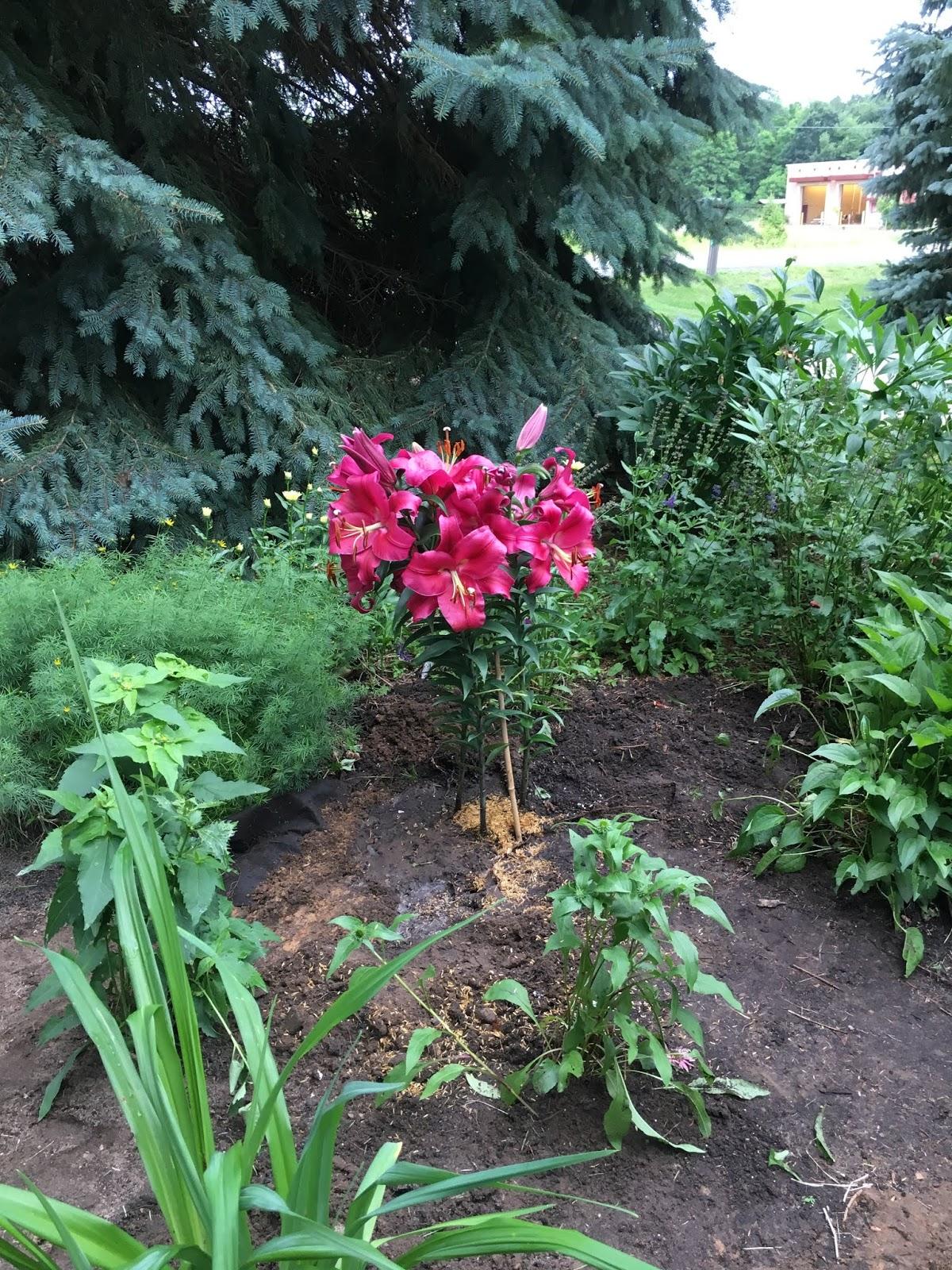 Home And Gardening With Liz Garden Island Updated