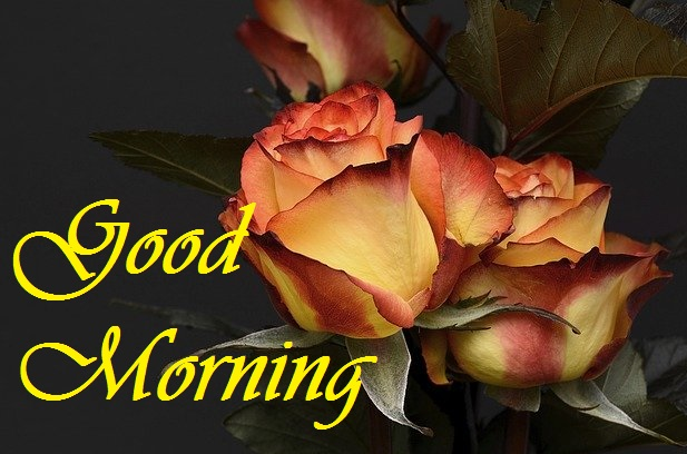 good morning yellow and red rose image