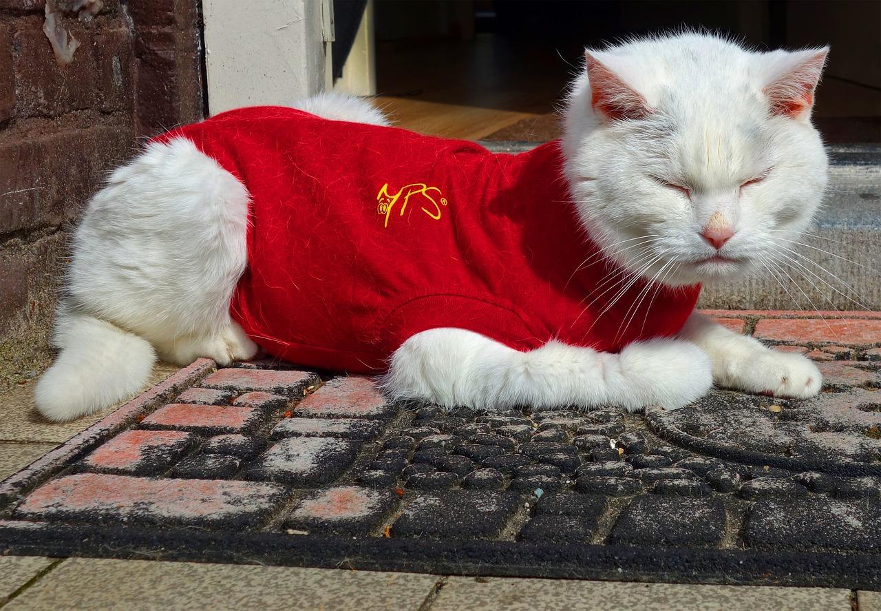 Découvrez pourquoi porter un costume pour votre chat n'est pas une bonne idée