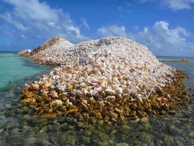 The fishermen of the island of Anegada created an entire island of conch shell over 800 years