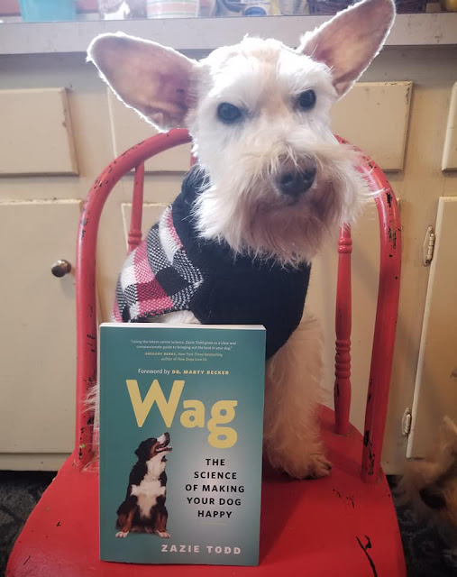 Wag Happy Dogs: A Photo Post (Part 2)