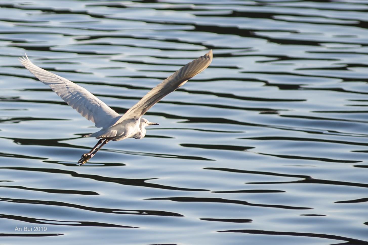 Bird in Xuan Huong Lake, Dalat
