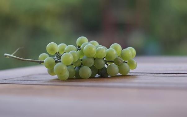Uvas verdes en racimo