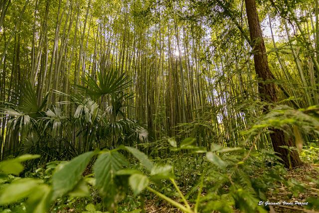 Plantas y Bambús de la Bambouseraie en Cévennes, Francia por El Guisante Verde Project