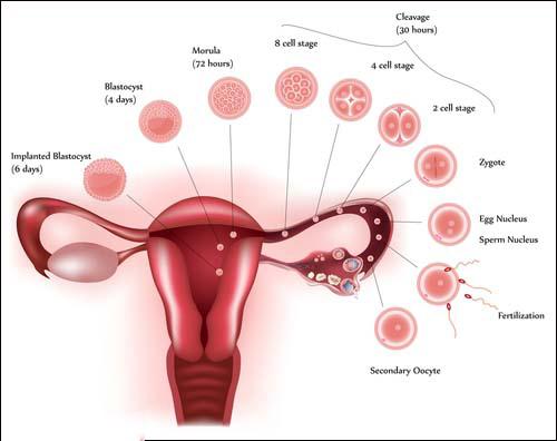 Menstrual problem