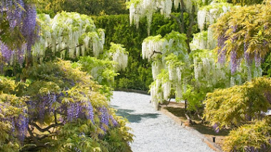 Wisteria Garden en el Jardín Botánico de Longwood