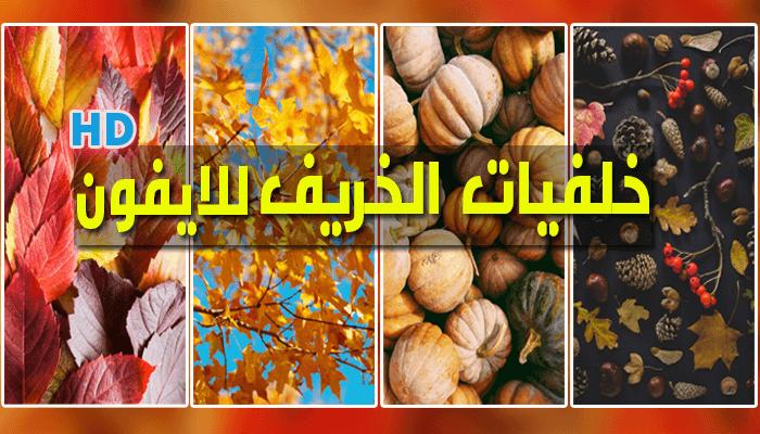 https://www.arbandr.com/2019/10/Autumn-Wallpaper-iPhone-HD.html