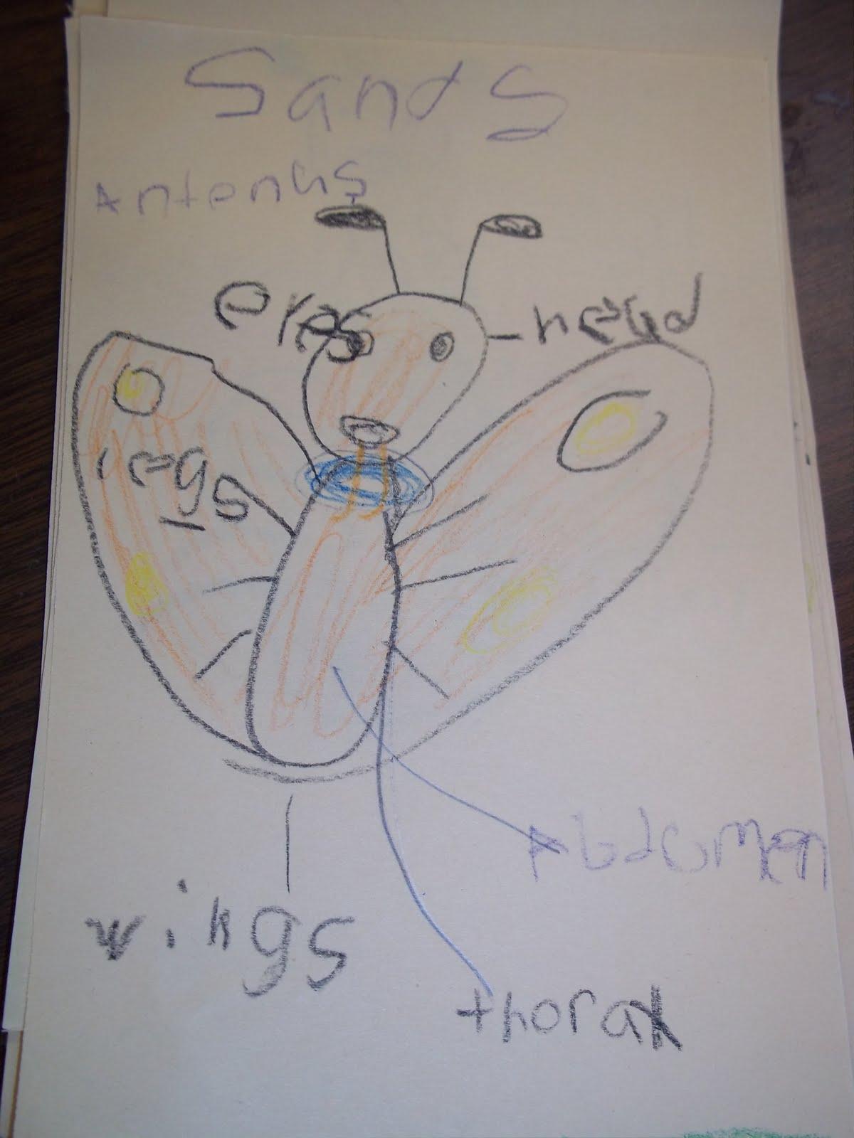 Mrs Wood S Kindergarten Class Insect Diagrams