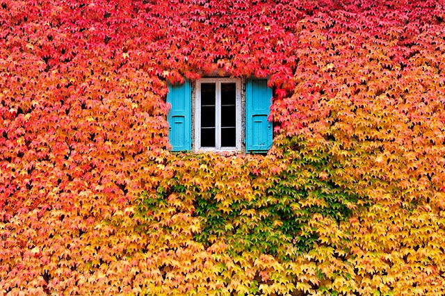 Autumn Leaves House Colors Nature Autumn Photography