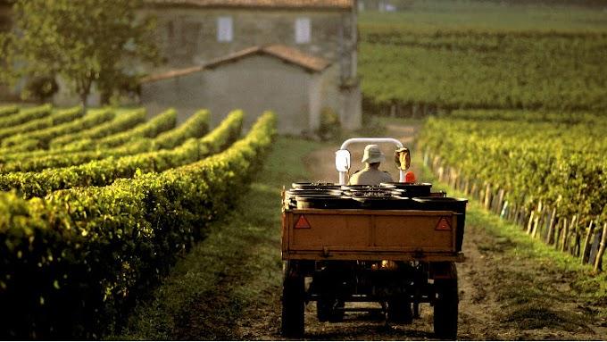 Megkongatták a vészharangot: aggasztó, ami a magyar bortermeléssel történik
