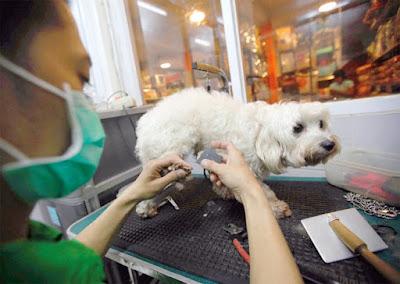 Harga Grooming Anjing Panggilan