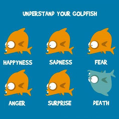 Understand your goldfish...