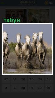 по воде бежит небольшой табун лошадей белого цвета