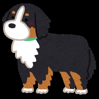バーニーズ・マウンテン・ドッグ(犬)