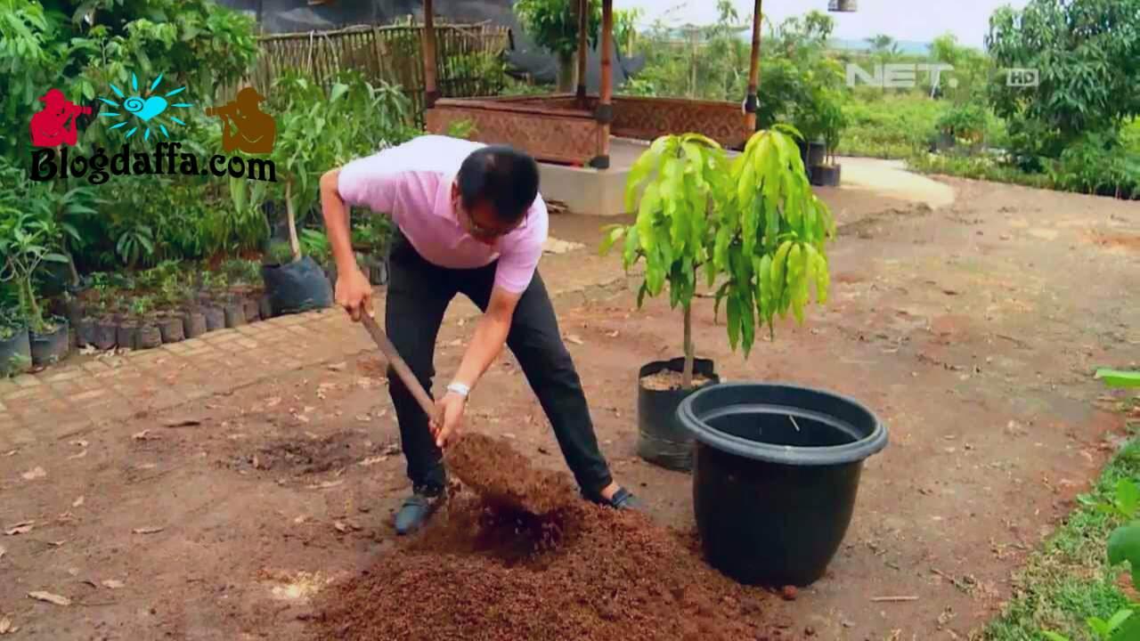 Cara Menanam bibit pohon