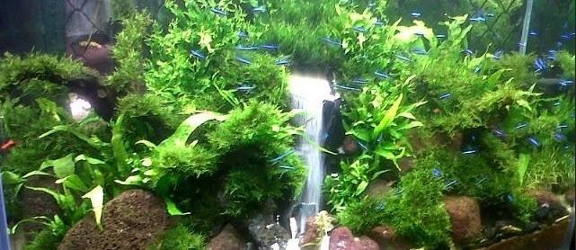 Desain Aquarium Air Tawar Model Terbaik Harga Murah Hingga Sekarang