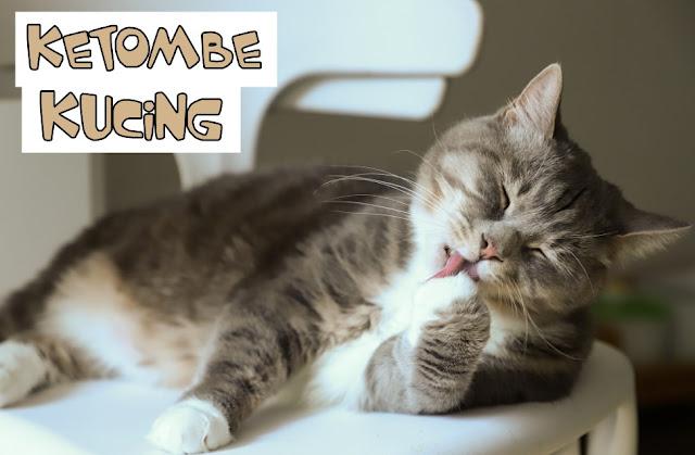 Salep Ketombe Kucing