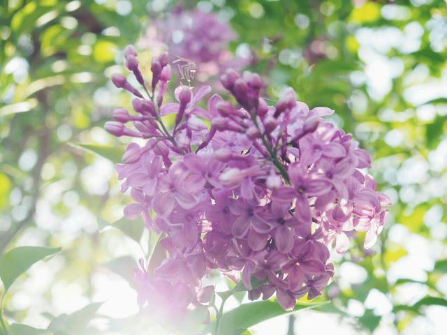 spring-bucket-list-blog-blumen