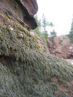 Seaweed Wall.