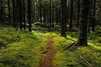 Forest Trail - Photo by David Bruggink on Unsplash