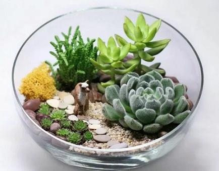 суккуленты в вазе