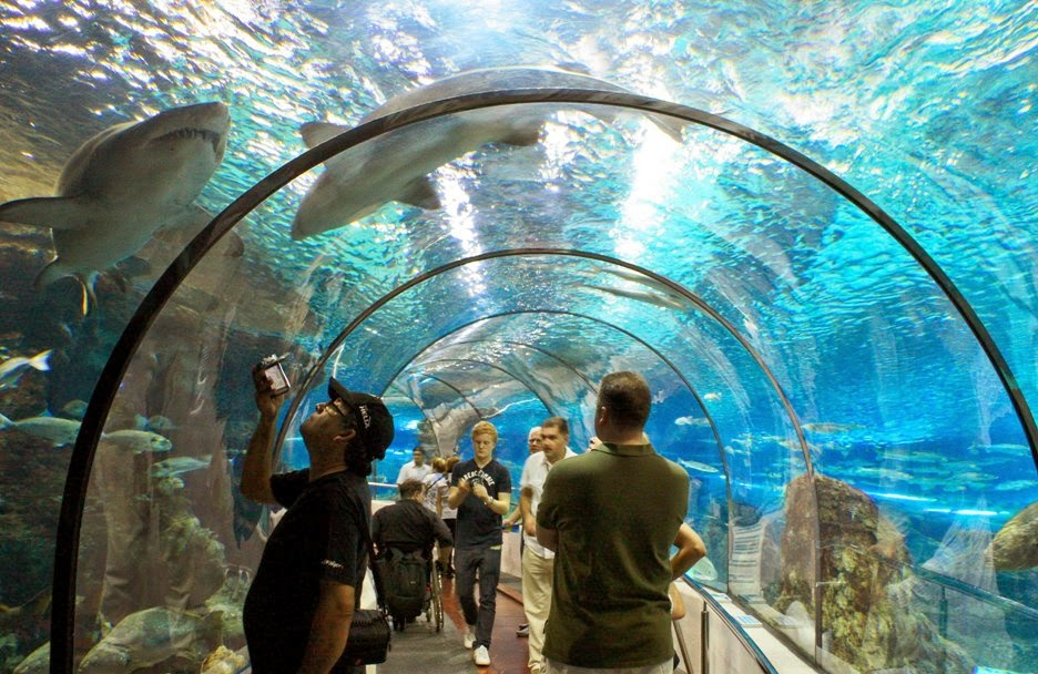 L aquarium de barcelona espanha dicas da europa for Aquarium de barcelona