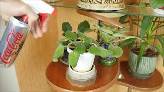 Tutorial Cara Membuat Somprotan Bunga dari Kaleng Bekas