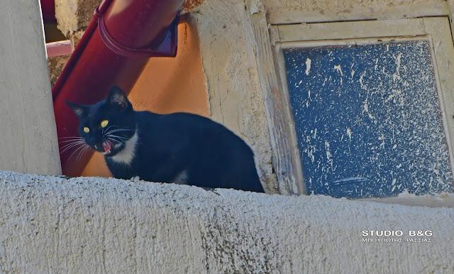 Μια άτακτη γατούλα αναστάτωσε το Παλιό Ναύπλιο