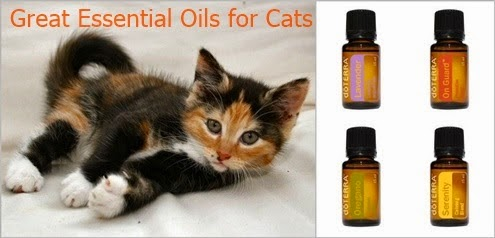 great essential oils for cats. Black Bedroom Furniture Sets. Home Design Ideas