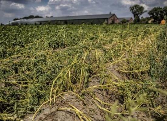 Foto cover Droogte in zandgebieden van Zuid-, Midden- en Oost-Nederland. Het verhaal - analyse van droogte 2018 en 2019 en bevindingen. Eindrapport