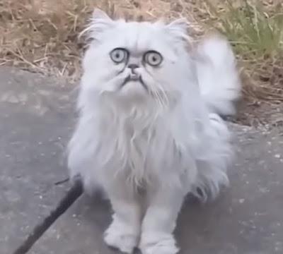 Crazy looking cat