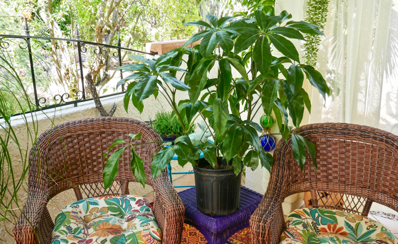 10 Tropical Houseplants for Instant Vacay Vibes