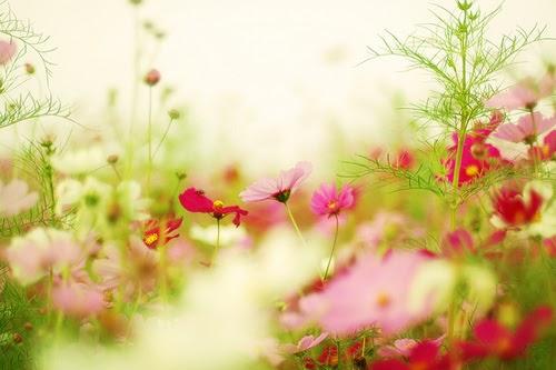 Os Poderosos Podem Matar Uma Duas Ou Três Rosas Mas Jamais Conseguirão Deter A Primavera Inteira: Untitled [untitleddear.blogspot.com]