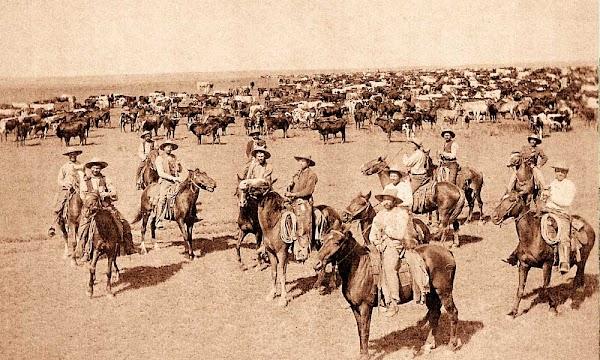 American History : The American Cowboy
