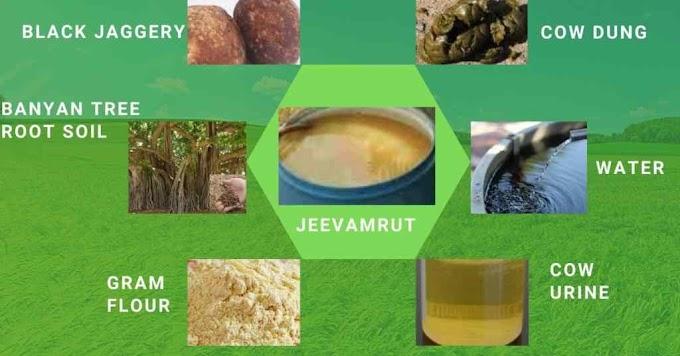 Organic Fertilizer Jeevamrut, Amrutpani, and Bijamrut (Preparation Method)