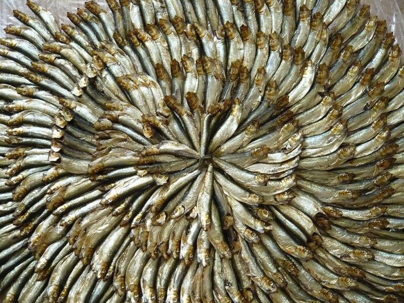 Photographie de poissons séchés morts placés en cercle concentriques par l'artiste 1011 pour dénoncer la pollution et la société de consommation.