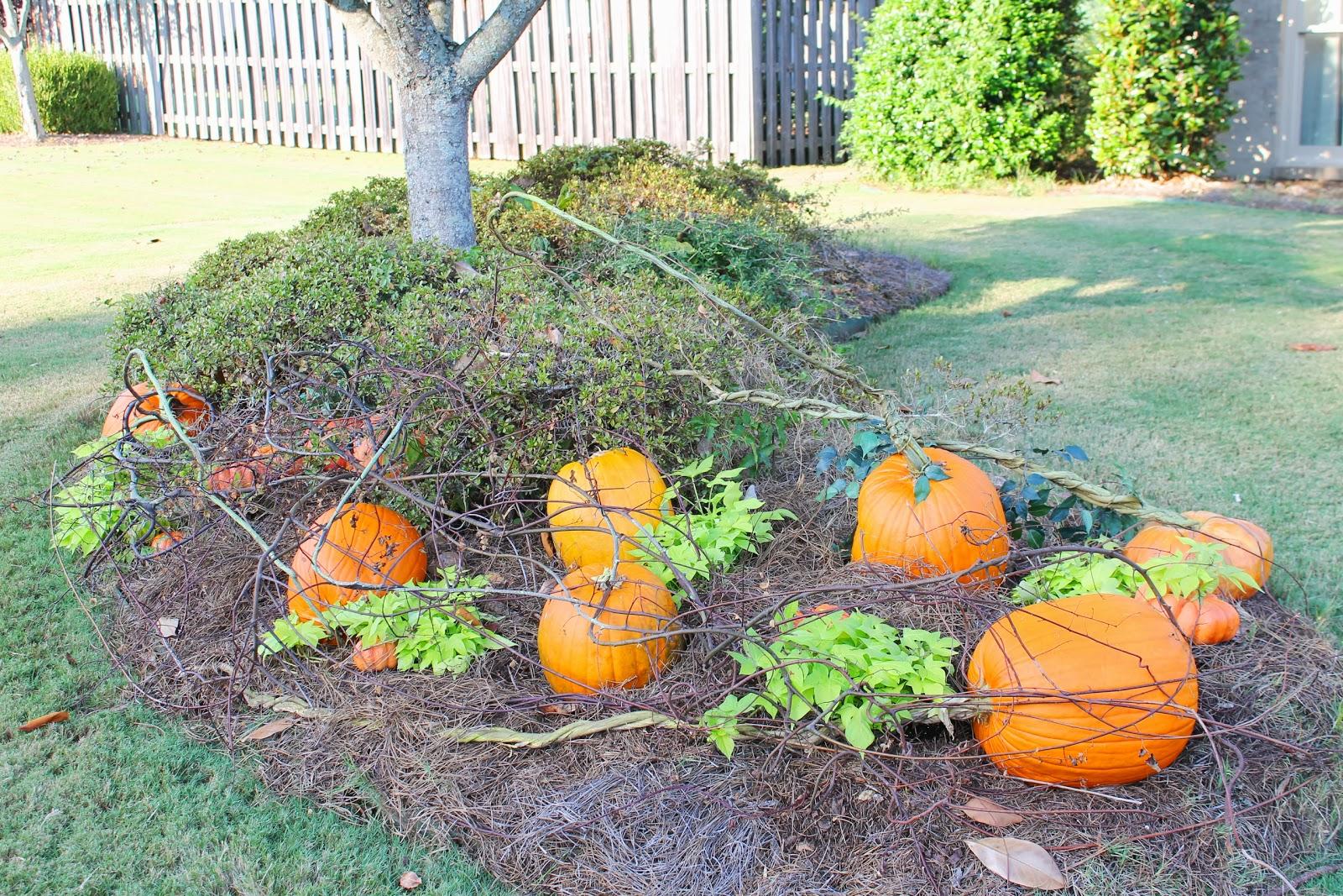 Miss Kopy Kat Almost Instant Pumpkin Patch