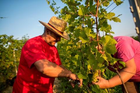 Jók az idei bortermelési kilátások