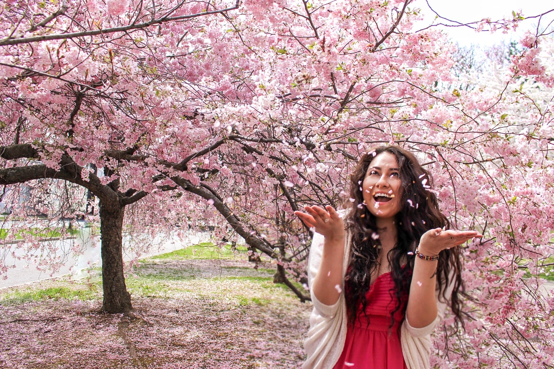 Branch Brook Park New Jersey Cherry Blossom Festival