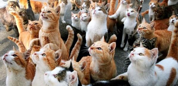 بيع القطط تعرف على اسعار كل انواع القطط