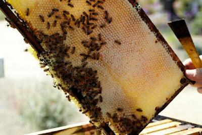 Ο πρωτάρης και το μέλι